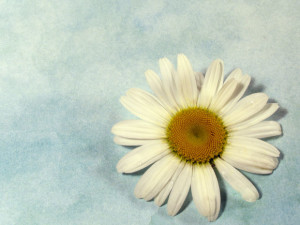 A simple daisy
